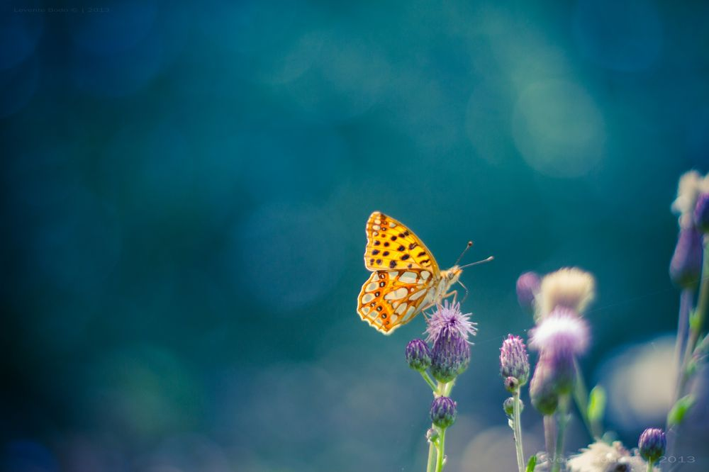 Photo in Nature #butterfly #flower #flowers #bokeh #colors #blue #magical #dream #dreamy