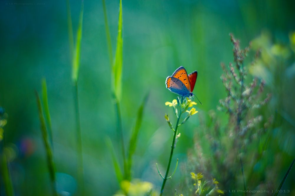 Photo in Nature #butterfly #flower #flowers #bokeh #colors #blue #blur #magical #dream #dreamy