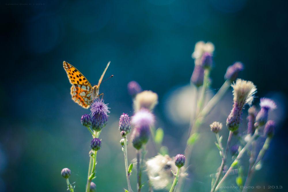 Photo in Macro #butterfly #flower #flowers #bokeh #sunset #colors #blue #sunlight #backlight #dream #dreamy #magic #magical #light #focus