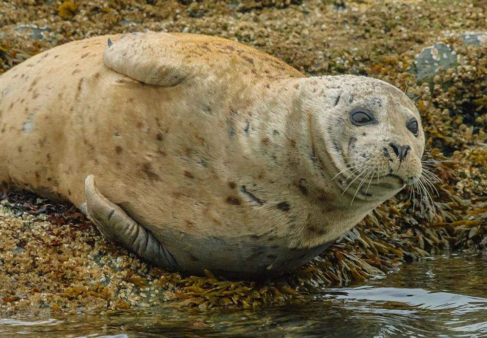 Photo in Animal #animal #wildlife #seal #handheld_camera #boat