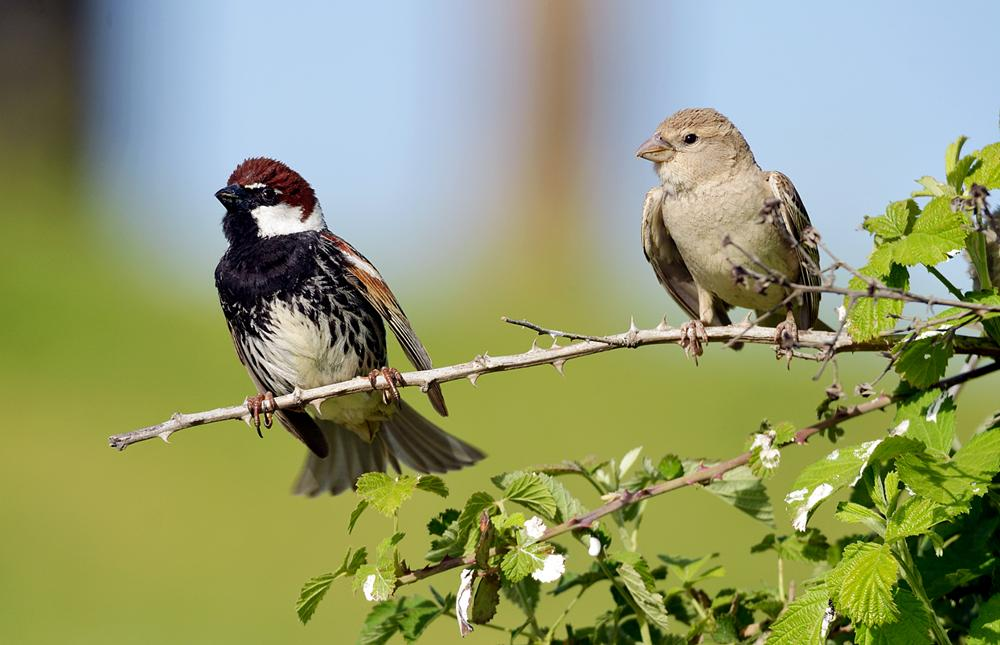 Photo in Nature #birds #birds of kurdistan #nature #animals #kurdistan