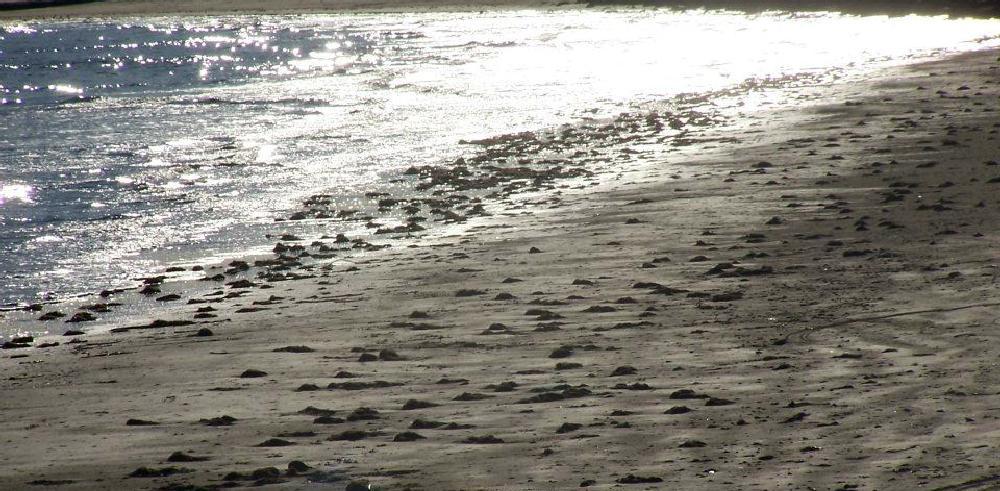 Photo in Sea and Sand #beach #sea #sand #water