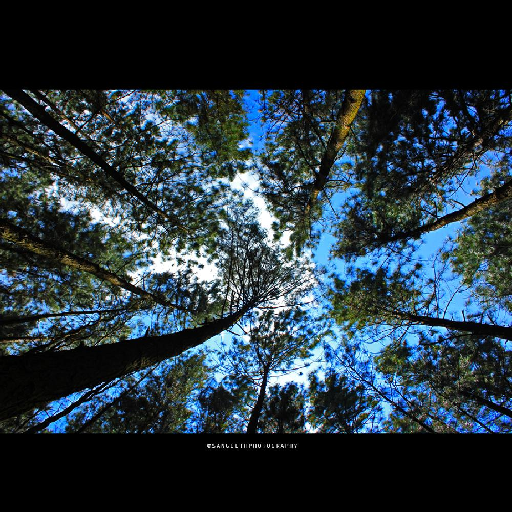 Photo in Nature #lowangle #shot #click #kerala #wagamon #godsowncountry #sangeethphotography #nature #tree