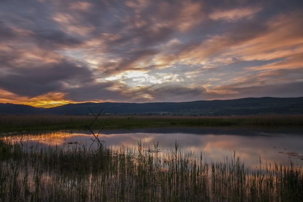 Photo in Landscape #lake #neuchâtel #champ pittet #grande cariçaie #yverdon