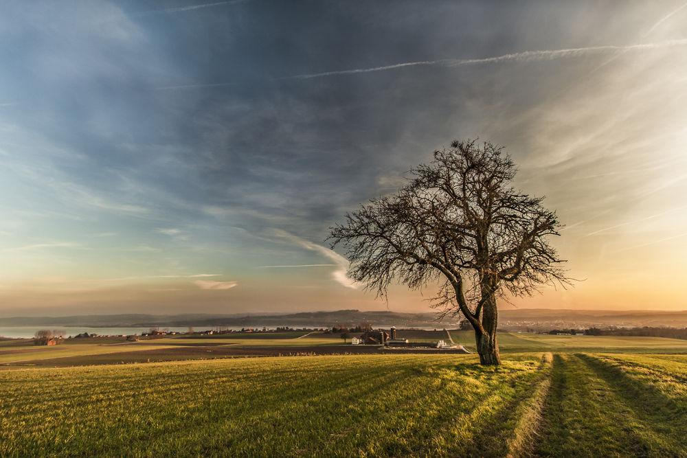 Photo in Landscape #switzerland #tree