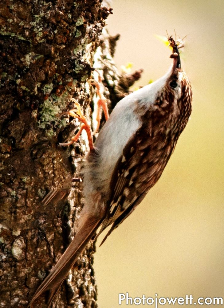 Photo in Random #treecreeper #wildlife #birds #nature #animal