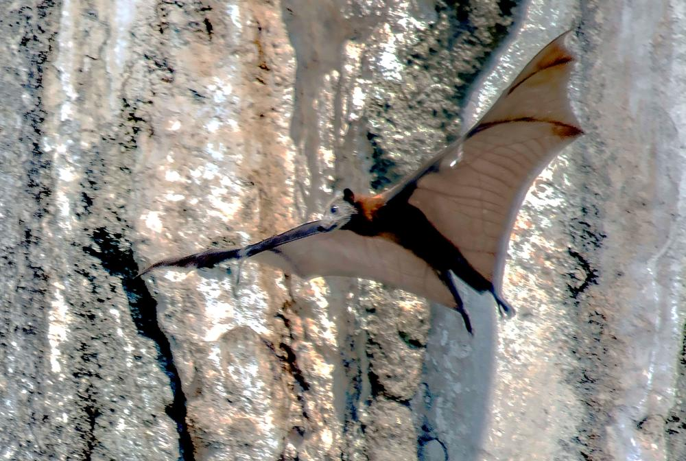 Photo in Nature #bat #animal #nature