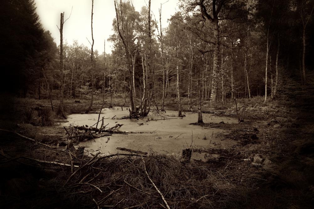 Photo in Lomo #sacrifice #bog #sagaland
