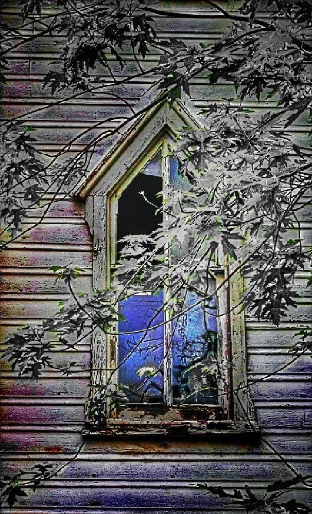 Photo in Random #window's #abandoned #southern