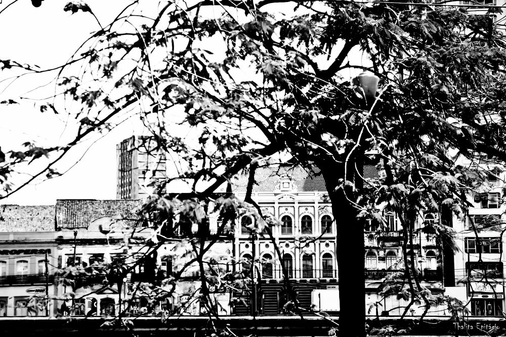 Photo in Random #recife #cidade #árvore