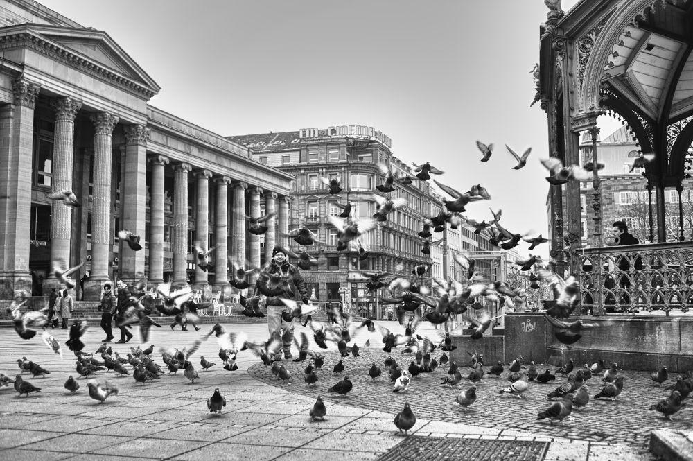 Photo in Random #hdr #birds #stuttgart