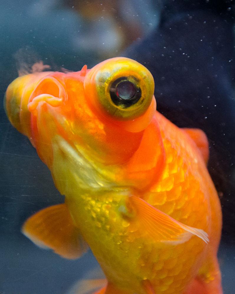 Photo in Random #fish #fish hammer