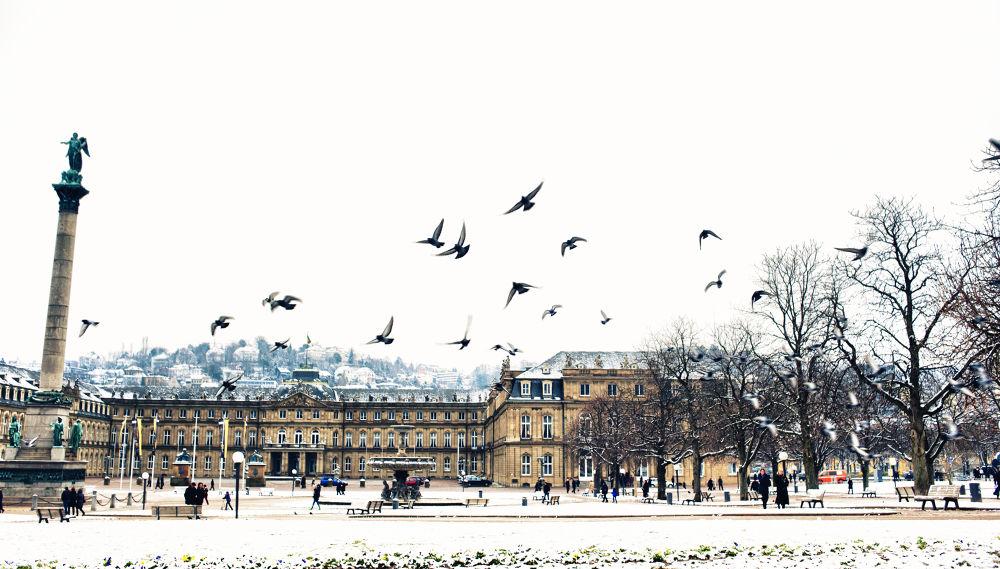 Photo in Architecture #winter #snow #birds #stuttgart #schloss platz