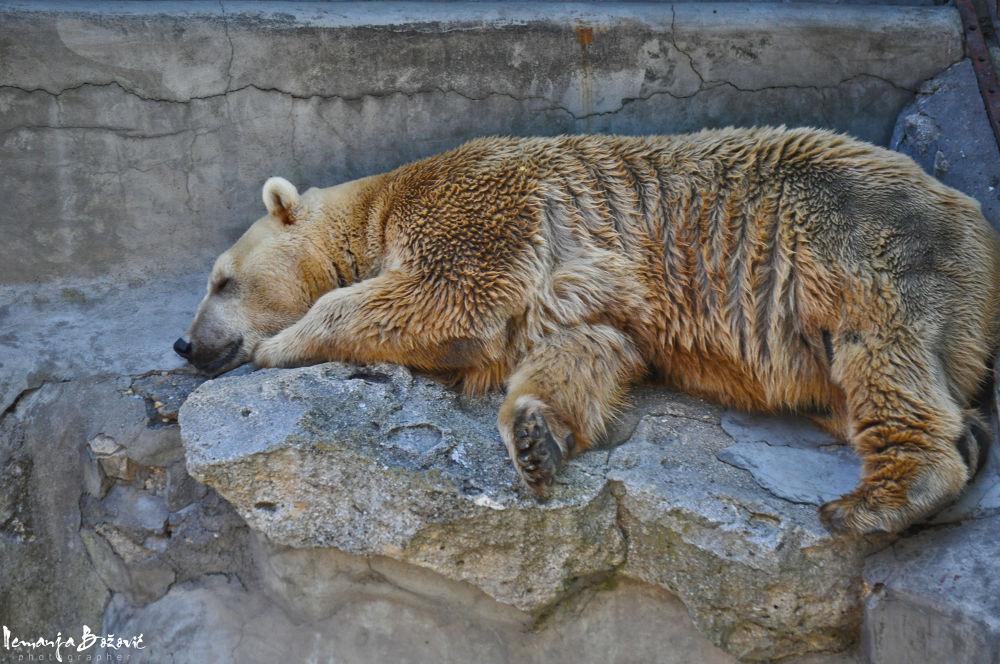 Photo in Random #lion #zoo #birds #horse #serbia #belgrade #animals #wild animal