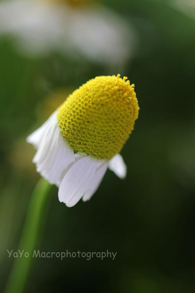 Photo in Macro #flower #nature #macro