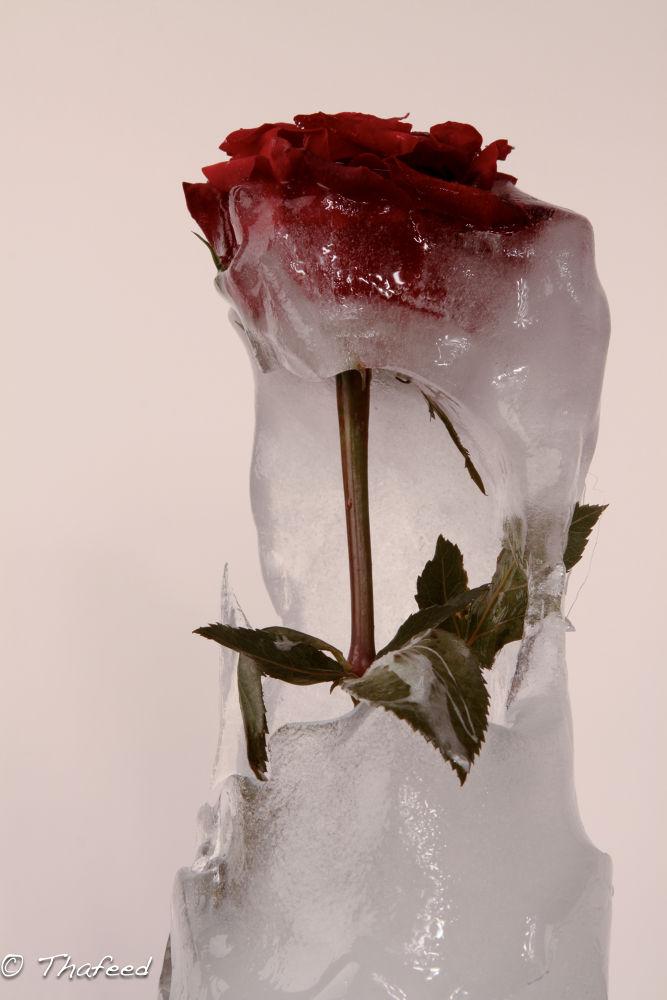 Photo in Still Life #ypa2013 #cold #love