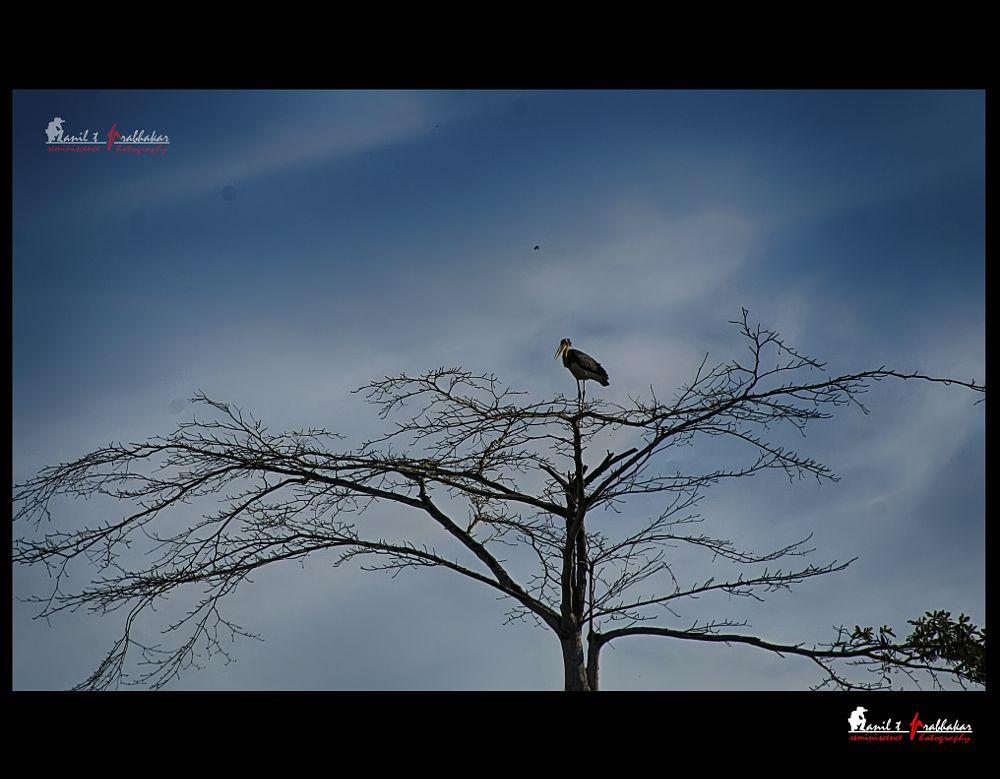 Photo in Animal #maraboustork #bird #migratorybird