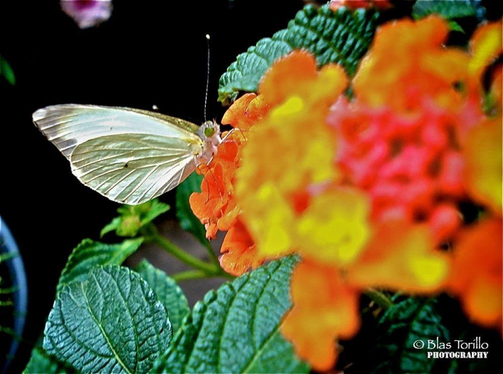 Photo in Random #de #mariposa #cerca #mi #casa