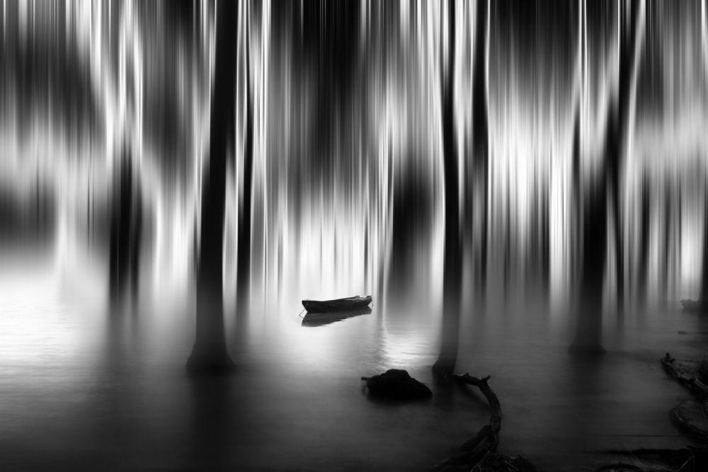 Photo in Black and White #bx #landscape #watescape #tree #fine art