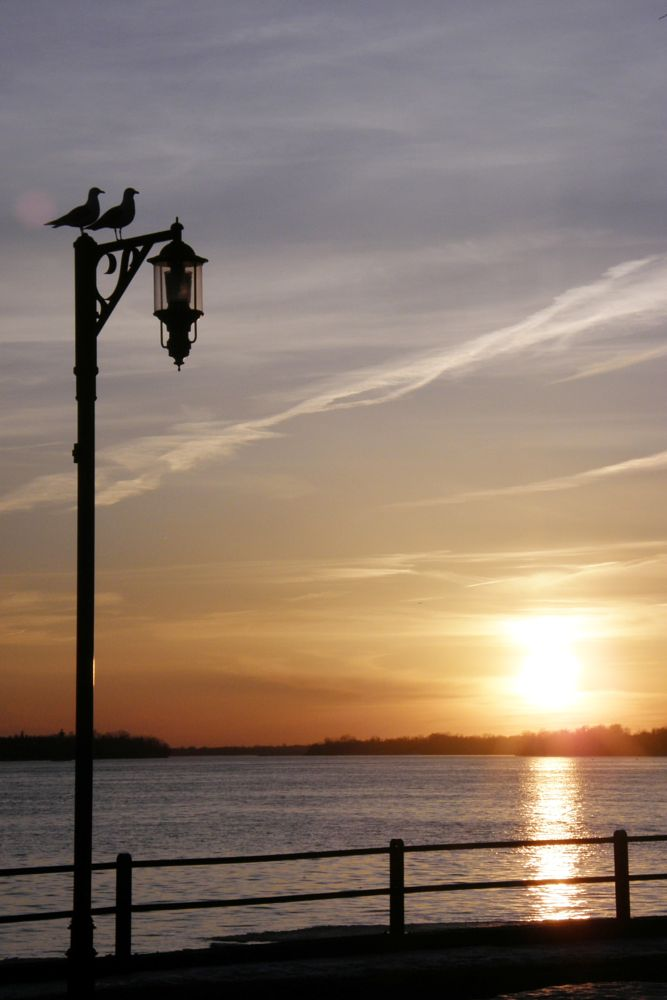 Photo in Street Photography #wildlife #birds #sun #sundown #lake #post #horison
