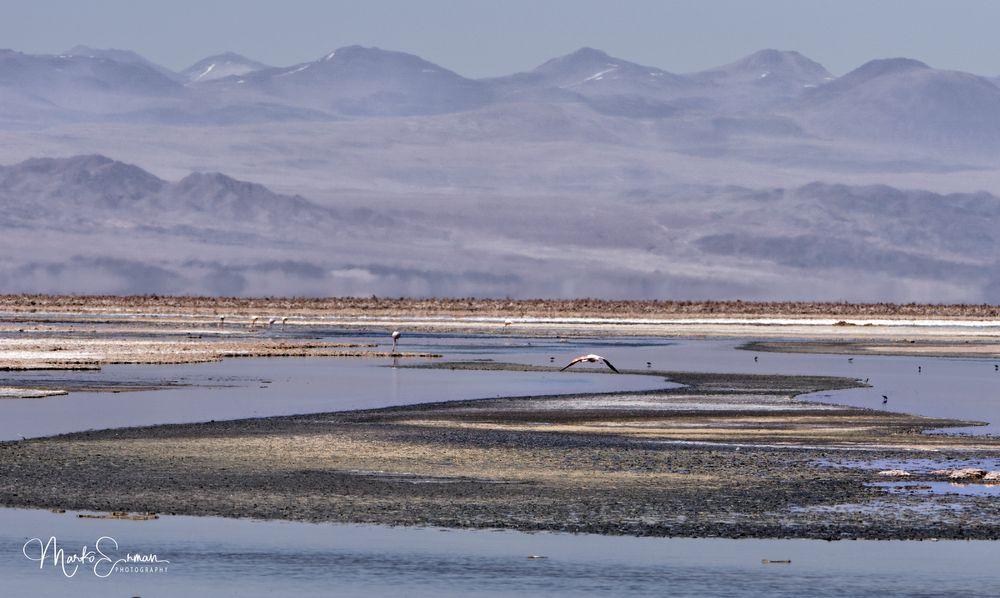 Photo in Landscape #san pedro de atacama #laguna chaxo #los flamencos national reserve