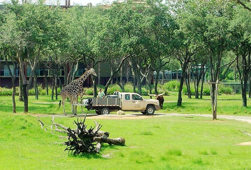 Photo in Animal #kingdom #feeding #our #balcony; #animal #lodge #giraffe