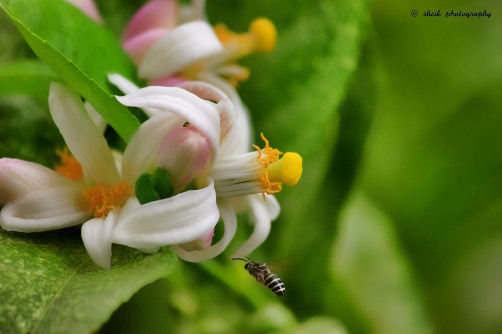 Photo in Random #bee #honey #food #macro #canon #photography #nature #garden