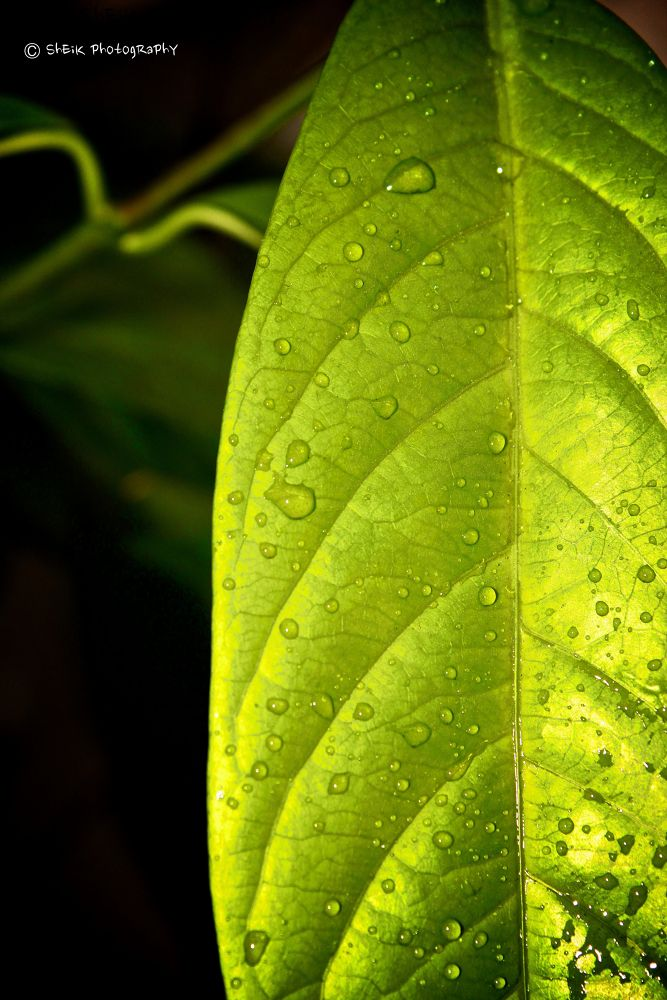 Photo in Macro #rain #droplets #leaf #7d