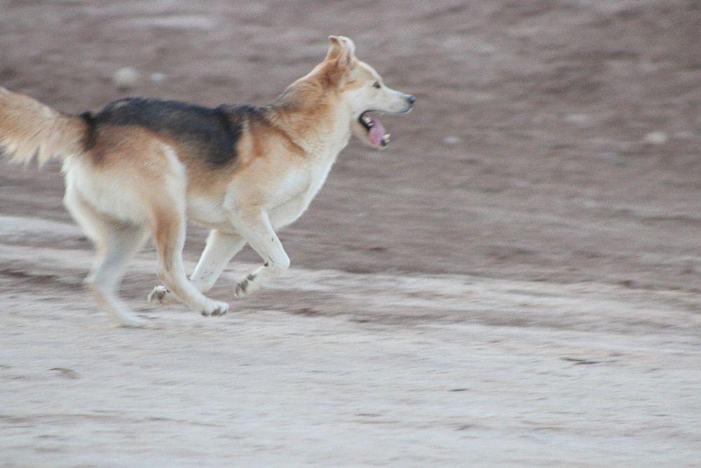 Photo in Animal #lobosn #lyoung403b #animal