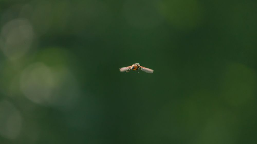 Photo in Animal #fly #insect #mini