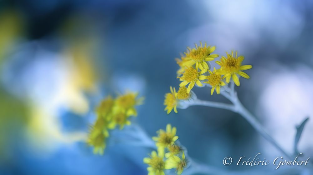 Photo in Macro #flower #flowers #light #blue #yellow #color #flora #shadow #sun #summer