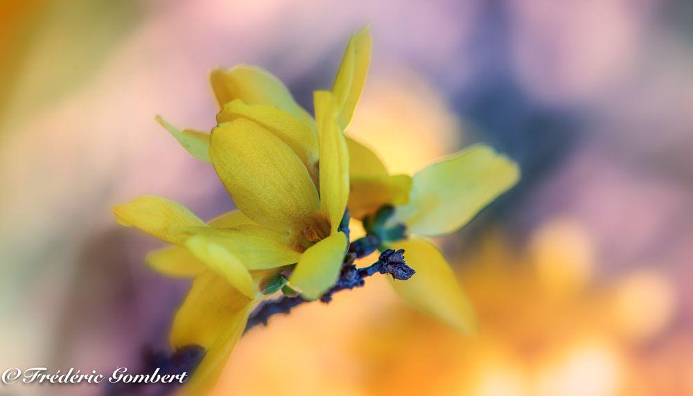Photo in Random #light #sun #yellow #gold #pink #sunrise #cloud #flower #flowers #portrait #bloom #blossom #color #colors