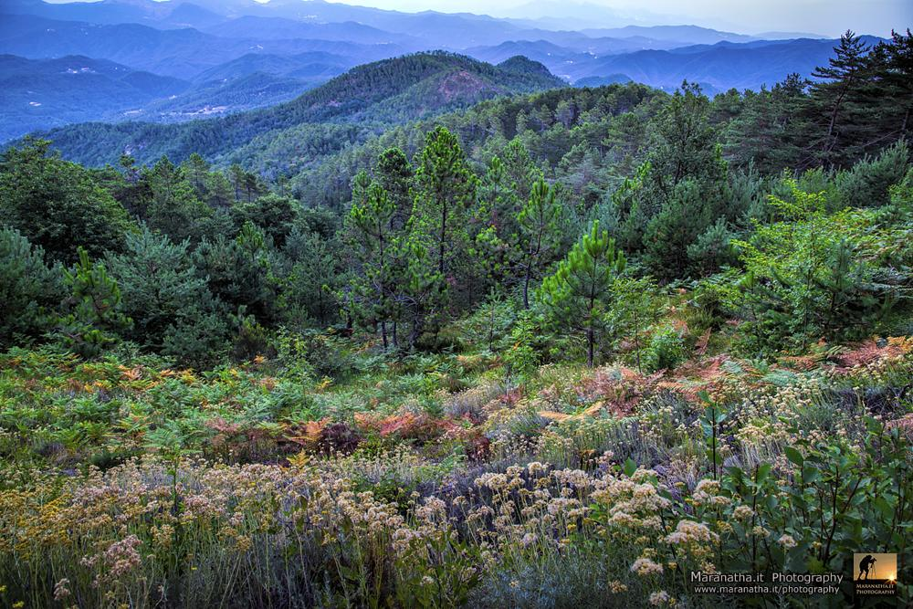 Photo in Nature #apennines #liguria #plants and flora