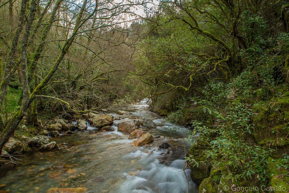 Photo in Landscape #portugal #figueiró dos vinhos #casal de são simão #rio zêzere #paisagem #natureza