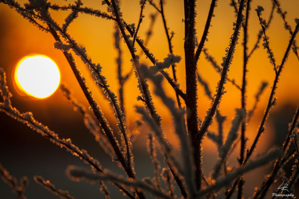 Photo in Random #tree #ice #frozen #sun #sunset #nature #winter #cold #warm #finland