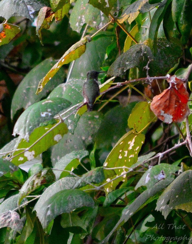 Photo in Nature #hummingbird #bird #nature #hiding #beauty