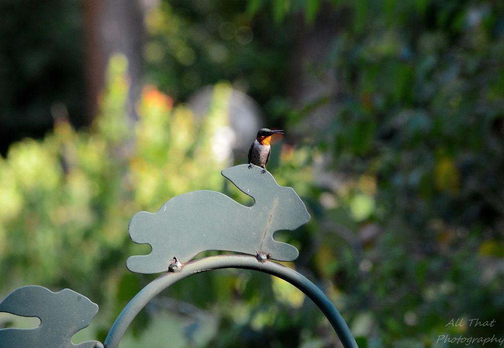 Photo in Nature #hummingbird #bird #nature #beauty