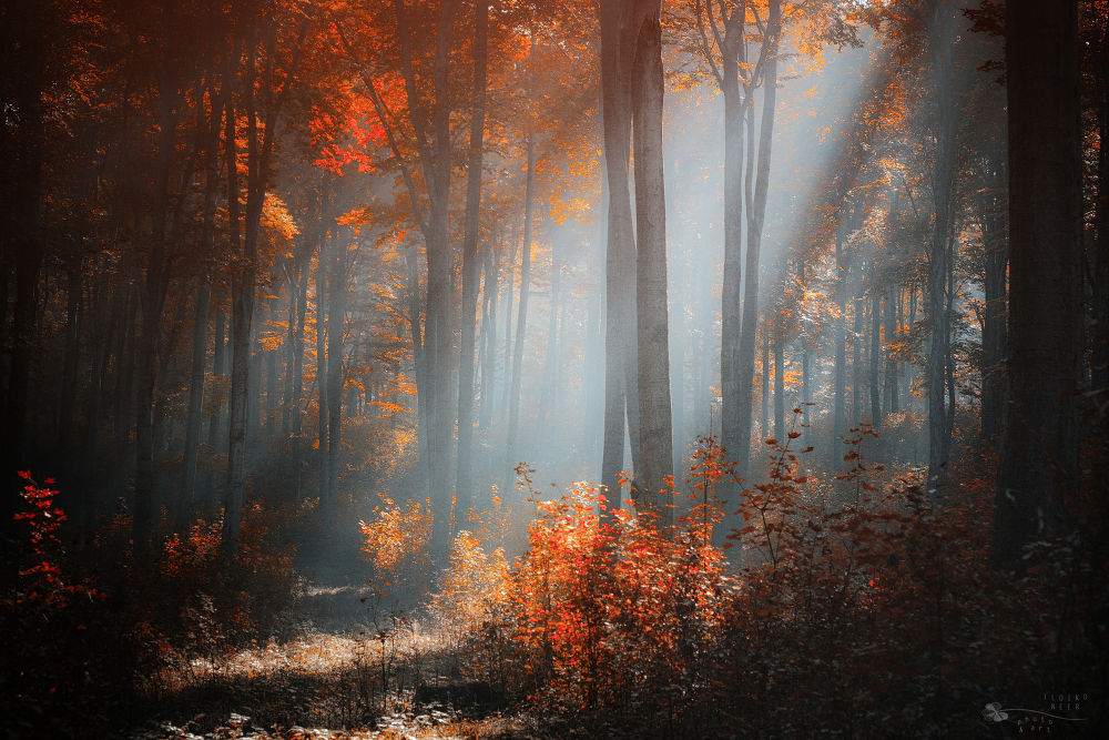 Photo in Nature #forest #trees #rays #autumn #ypa2013 #nature #light #woods #leaf #fall #leaves #woodland