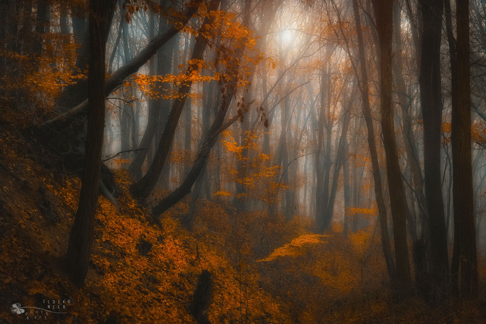 Photo in Nature #ypa2013 #forest #mist #fog #light #sun #trees #woods #fall #woodland #nature