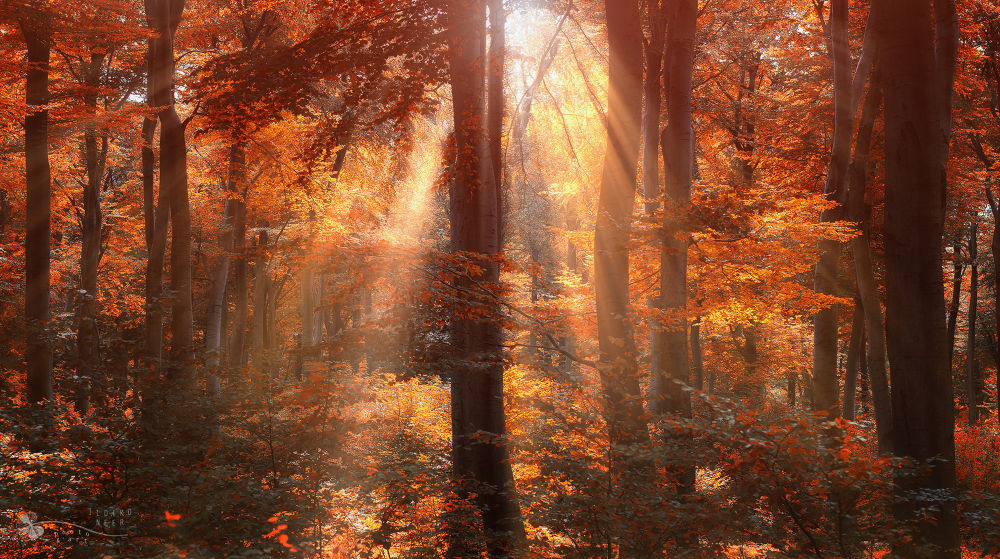 Photo in Nature #forest #trees #rays #sun #woods #leaves #autumn