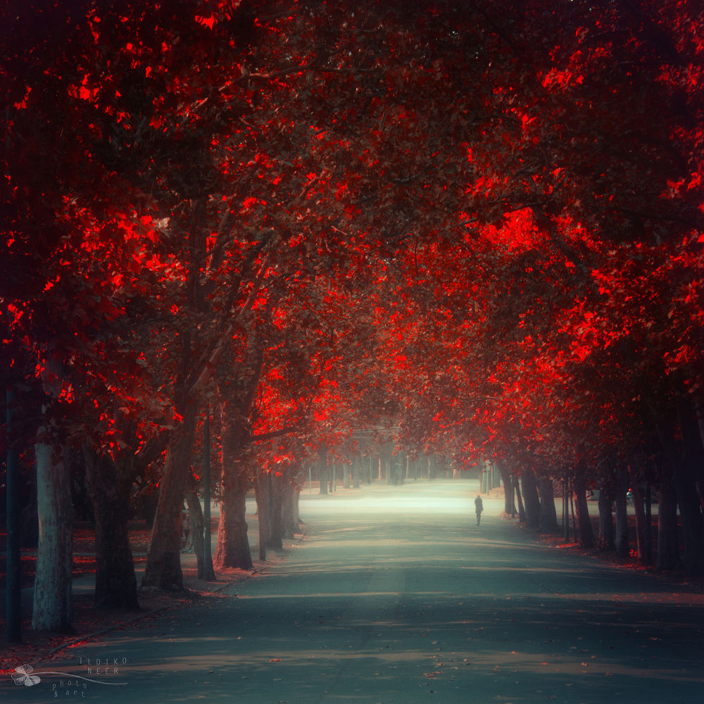 Photo in Nature #trees #road #autumn #fall
