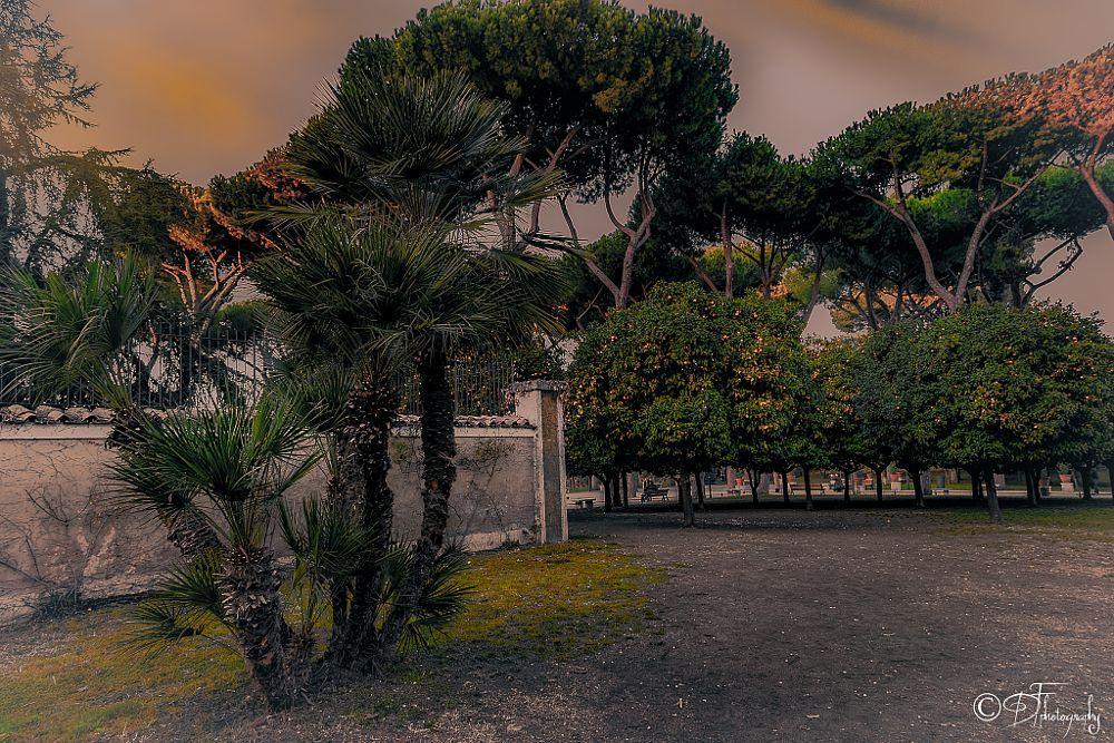 Photo in Urban #parco savello #garden #oranges #rome
