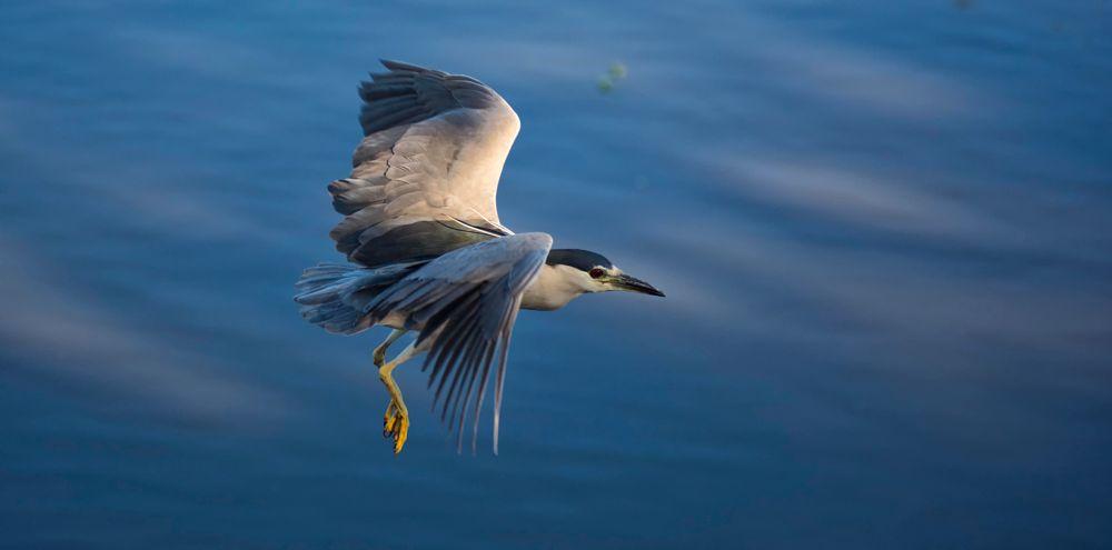 Photo in Animal #pássaro #pájaro #bird #flight #vuelo #piracicaba