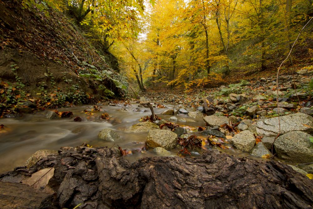Photo in Nature #nature #autumn #yellow #green #orange #red #trees #water #long exposure #color