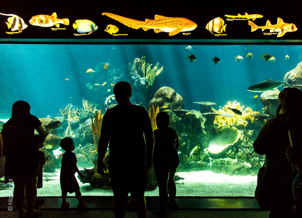 Photo in People #fish #aquariam #tank #zoo #minnesota #kids