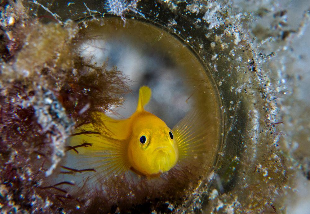 Photo in Underwater #scuba #diving #indonesia #travel #underwater