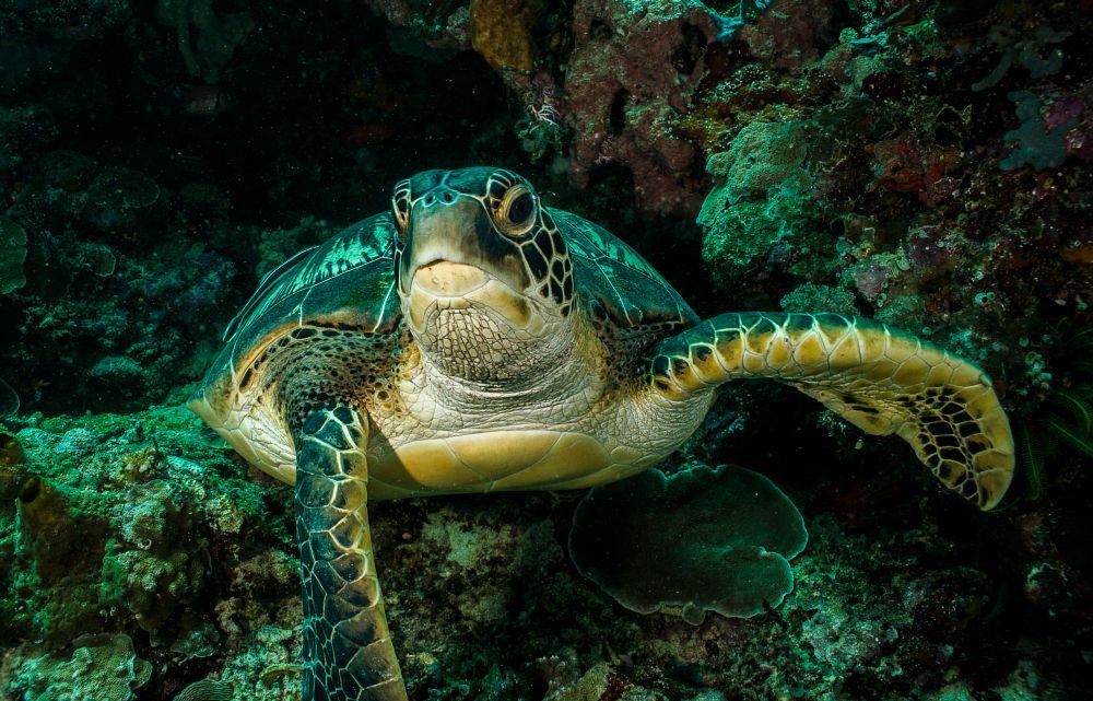 Photo in Underwater #scuba #diving #indonesia #underwater #travel