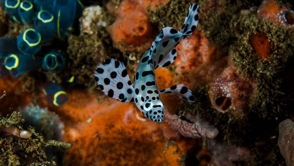 Photo in Underwater #scuba #diving #underwater #indonesia #travel