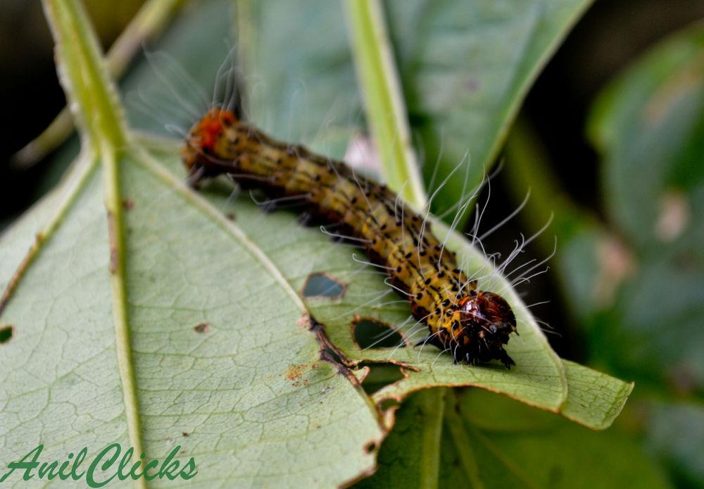 Photo in Macro #nature #macro #kerala #anilclicks