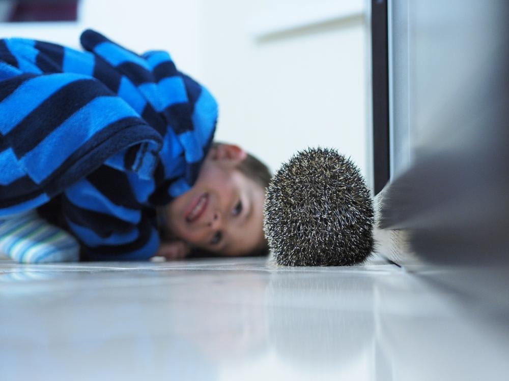 Photo in Animal #hedgehog #boy #home